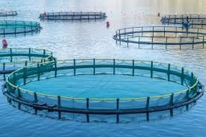 Aquaculture fish farm pens